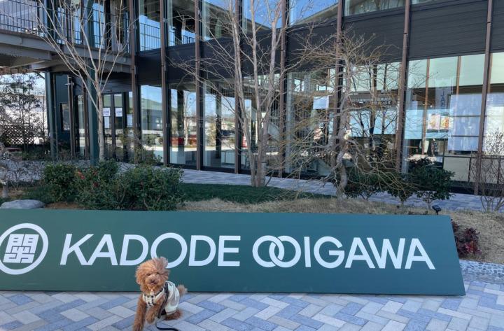 KADODE OOIGAWAでSLを見てドッグランによってきたよ(島田市・大井川)