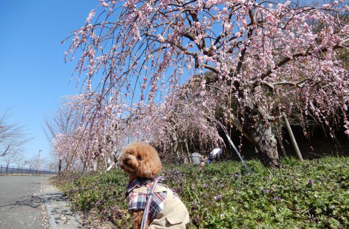 小笠山総合運動公園エコパに梅を見てお散歩してきたよ(袋井市愛野)