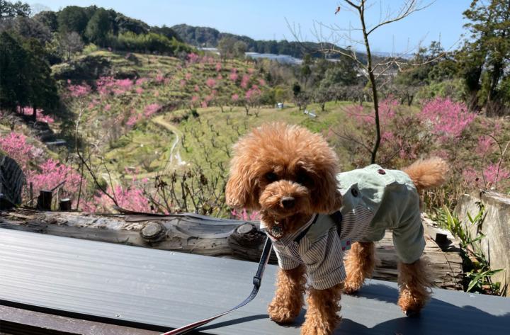 敷地里山公園へお散歩してきたよ-磐田市