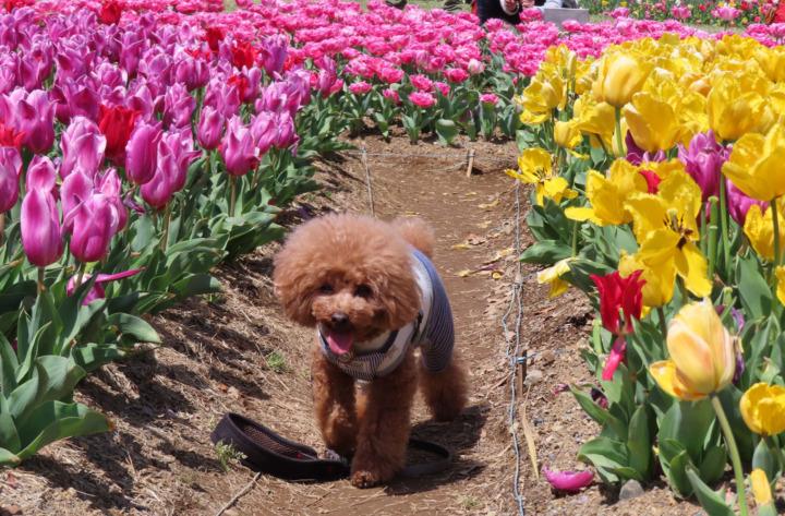 吉田公園でお散歩(榛原郡吉田町)-チューリップ・桜など季節ごといろいろ
