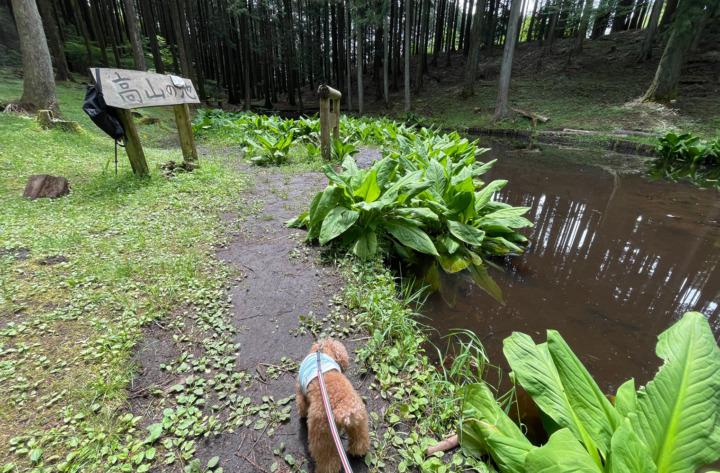 高山市民の森できれいな空気を吸って、アウトドアランチ楽しんできたよ(静岡市葵区水見色)